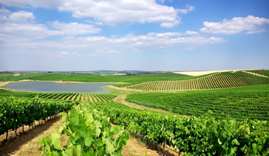 Full Day Wine Tour in Alentejo From Lisbon