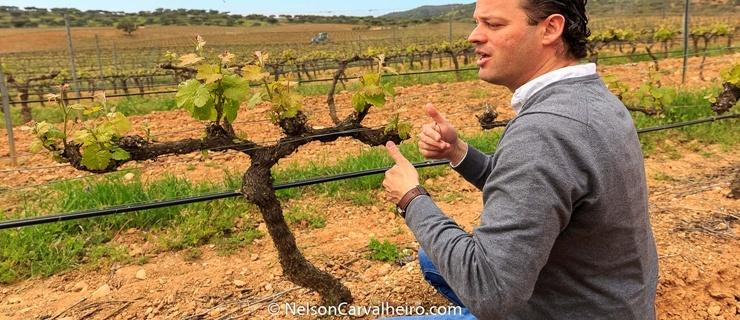 Nelson_Carvalheiro_Alentejo_Wine_Travel_Guide_Herdade_Sobroso-14.jpg