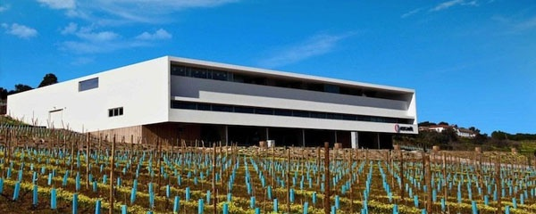 1-day Wine Tour to the Wine Producing Estates in Lisbon