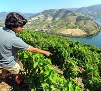 quinta_carvalhas_wine_tour.jpg