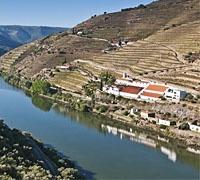Quinta de la Rosa - Wine Tour