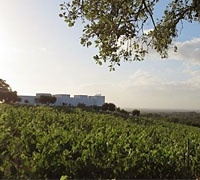 Serenada Enoturismo Winery
