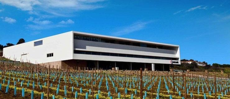 Adega Mãe Lisbon Wine Tour