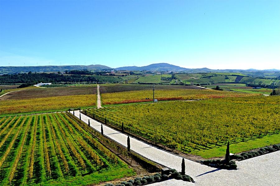 wineries_lisbon_adega_mae